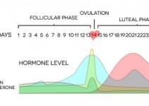 hormone-level_small_optim