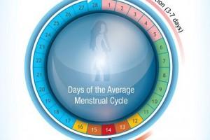 menstrual chart