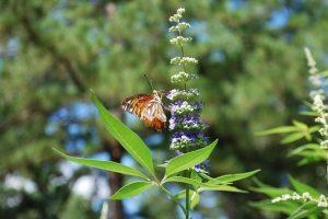 Vitex Guide: Benefits, Side-Effects & Precautions of Using Vitex For PMS or Fertility