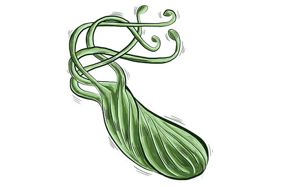 heliobacteri bacteria