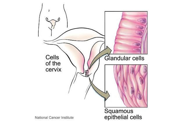 Cervical mucus